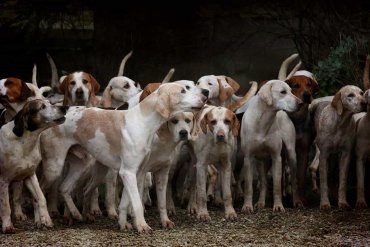 dogs hank