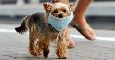 hank - dog with mask